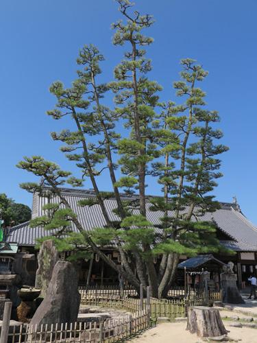 2015miyajima-2.jpg