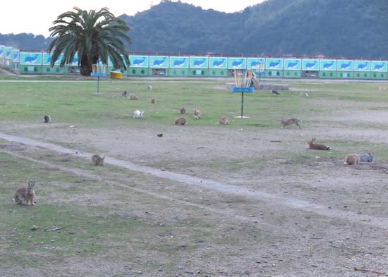 2015usagijima-26.jpg