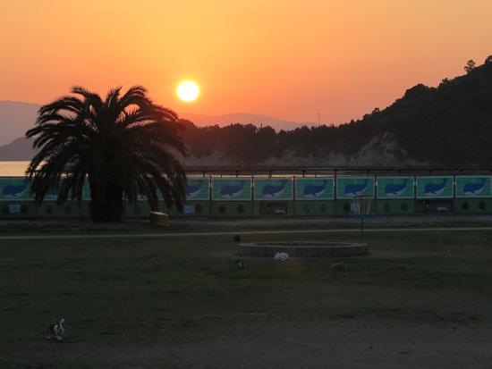 2015usagijima-8.jpg
